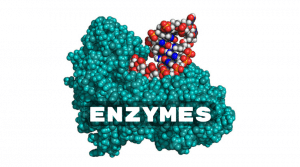 CV-600 Enzymes in action!