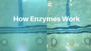 How Orenda Enzymes Work