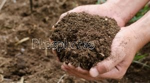 Where do Phosphates come from?