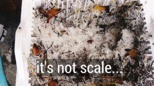 Calcium Hydroxide Crystals vs. Scale